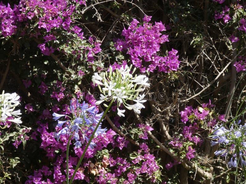 Blumen von Gartenfarben im Sommer lizenzfreie stockbilder