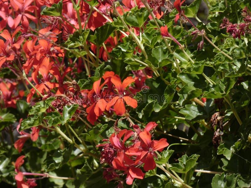 Blumen von Gartenfarben im Sommer lizenzfreies stockfoto
