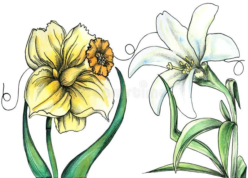 Blumen weniger IDA - flüsternde Blumen stock abbildung