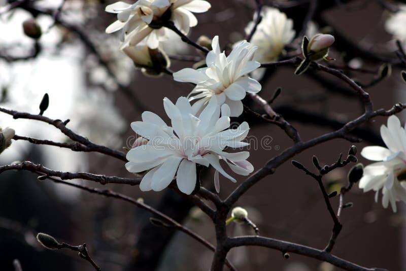 Blumen wieder geboren stockbilder