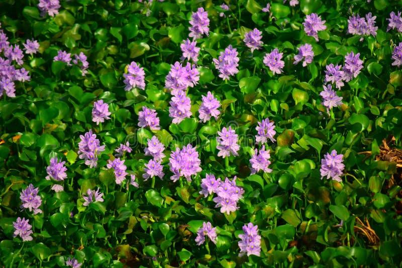 Blumen in wildem Sri Lanka lizenzfreie stockbilder