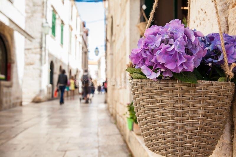 Blumen zu Beginn des Frühlinges in den Gassen der alten Stadt von Dubrovnik lizenzfreies stockbild