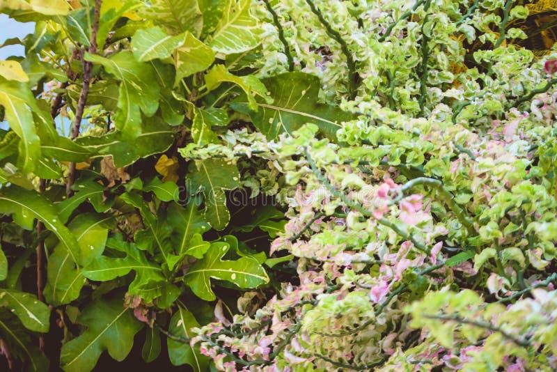 Blumenanlagen im Hausgarten stockfoto