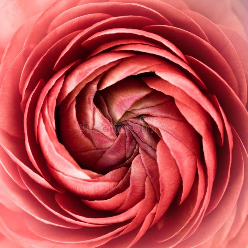 Blumenauszug lizenzfreie stockbilder