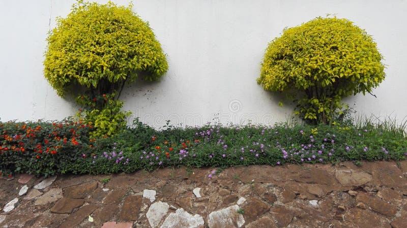 Blumenbäume quellen trmmed hervor stockbild