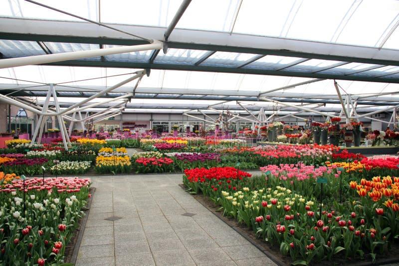 Blumenbaumschule lizenzfreies stockfoto