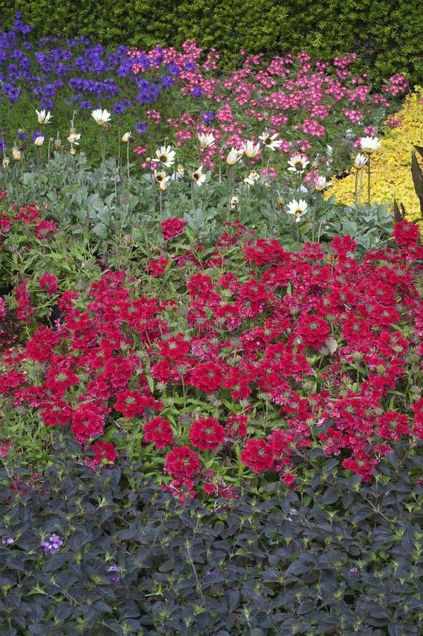Blumenbeet in blühendem Garten stockfoto