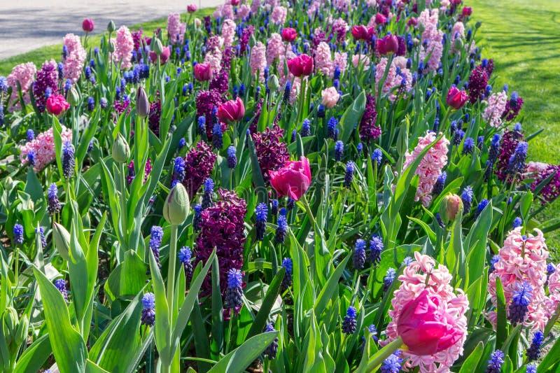 Blumenbeet mehrfarbig in der Gartenlandschaft Verschiedene Blumen am sonnigen Tag stockfoto