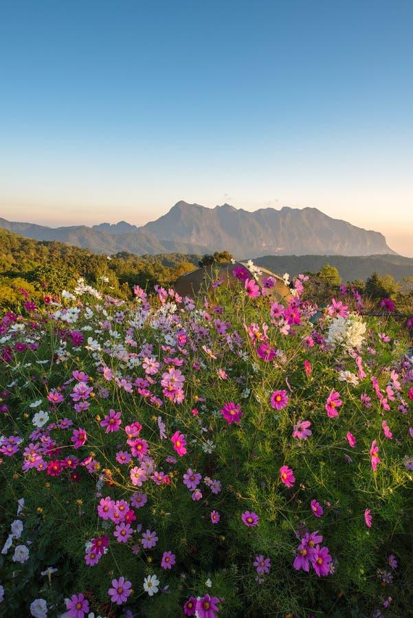 Blumenbeet mit der schönen Natur stockfotografie