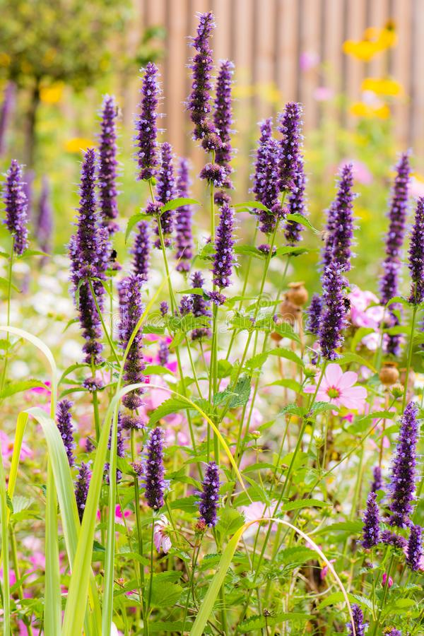 Blumenbeet mit verschiedenen Sommerblumen lizenzfreies stockbild