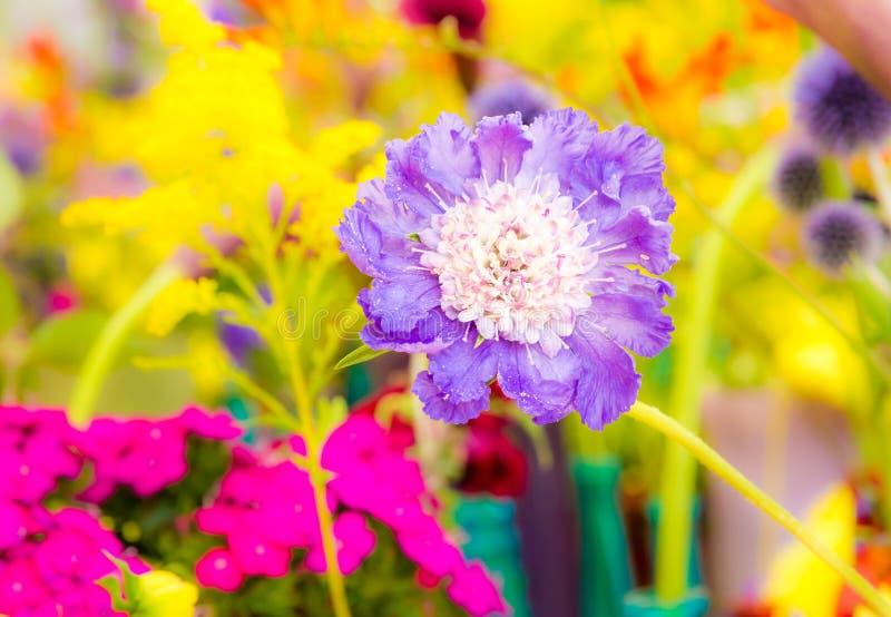 Blumenbeet mit verschiedenen Sommerblumen stockfotografie