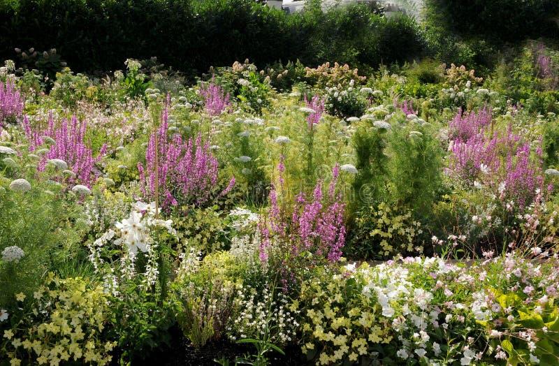 Blumenbeet mit wunderbaren blühenden Sommerblumen lizenzfreie stockfotos