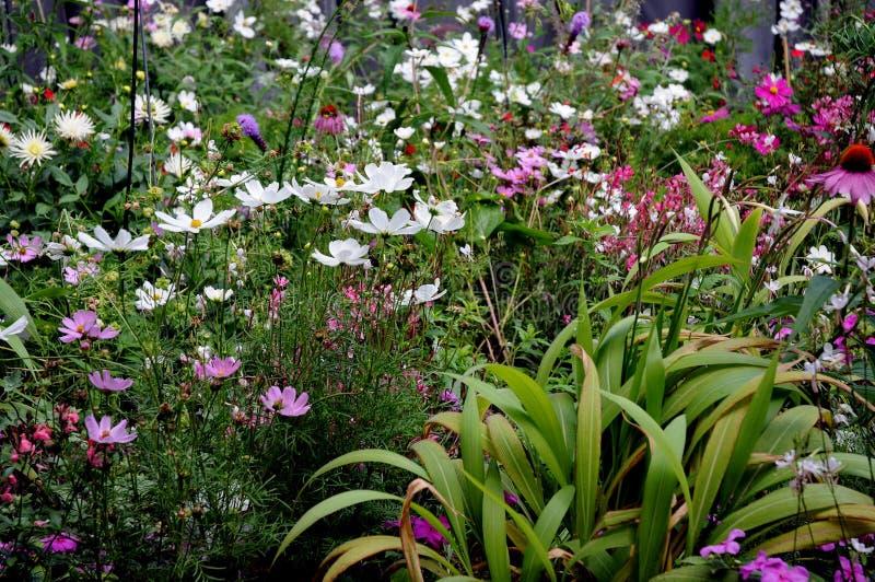 Blumenbeet mit wunderbaren blühenden Sommerblumen lizenzfreies stockbild