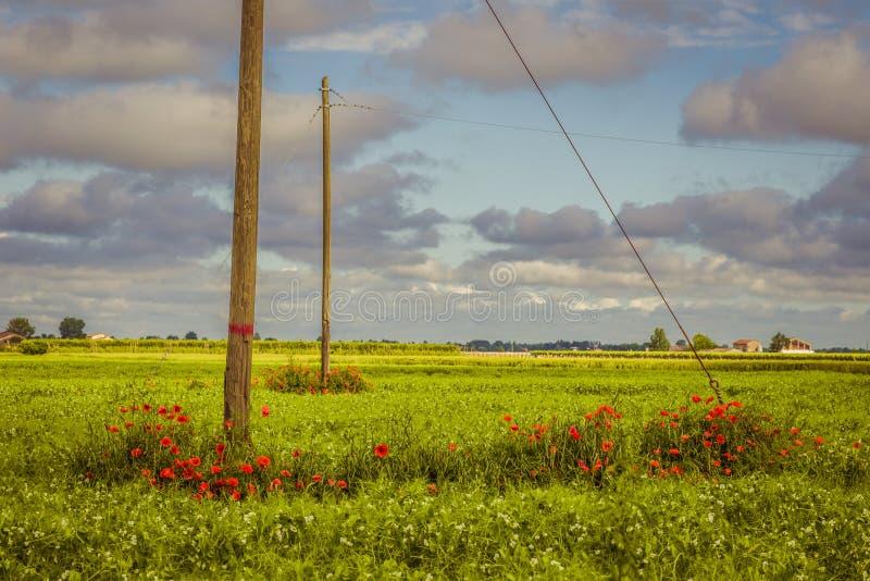 Blumenbeet von Mohnblumen lizenzfreie stockfotografie