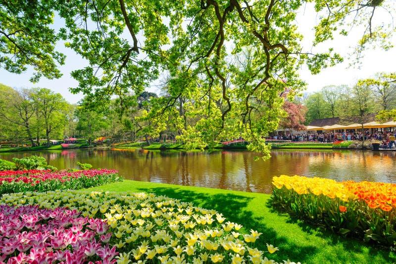 Blumenbeete des Keukenhof Gardens in Lisse, Niederlande stockfotos