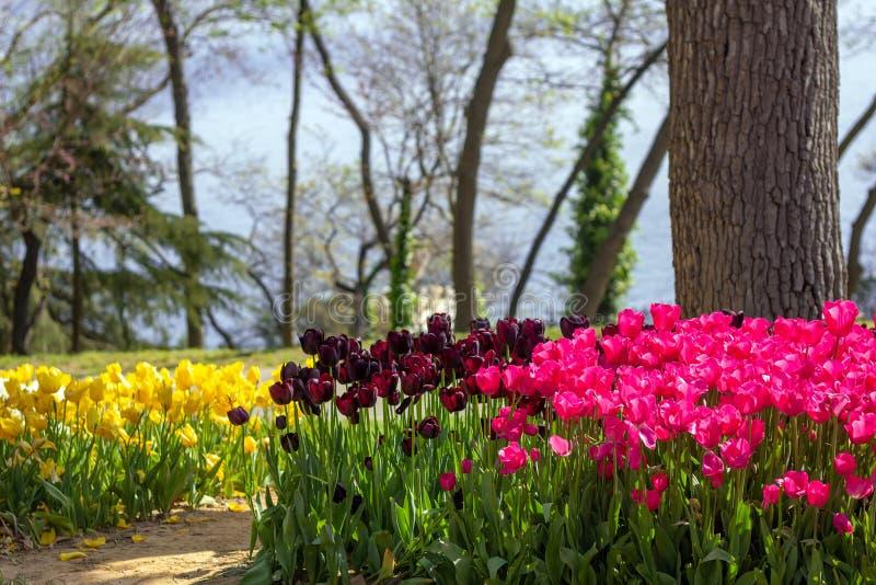 Blumenbeete von Tulpen am Tulpen-Festival in Emirgan-Park, Istanbul, die Türkei stockfoto