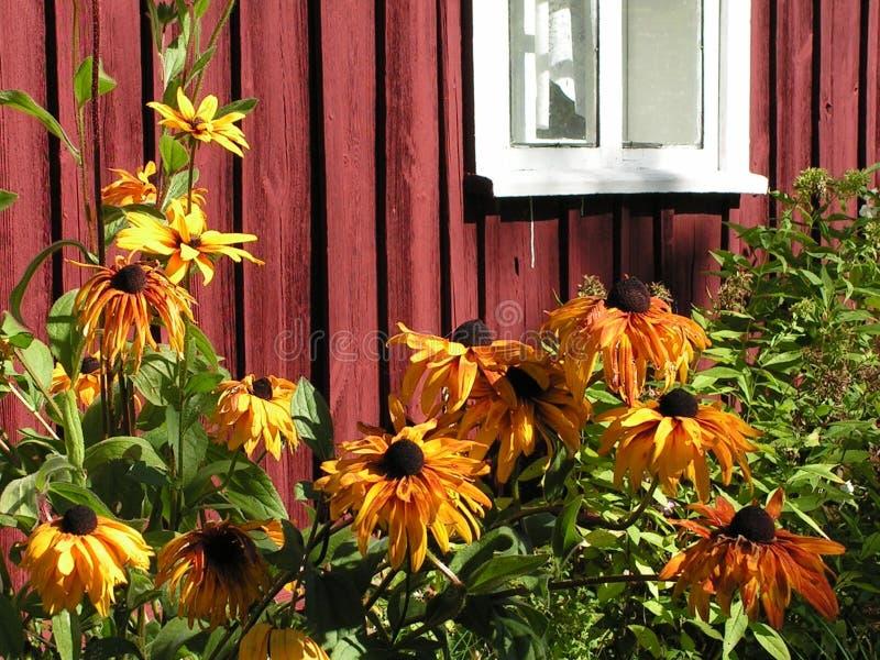 Blumenbett durch das Fenster stockfotografie