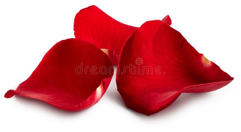 Blumenblätter des Rotes stiegen stockbild