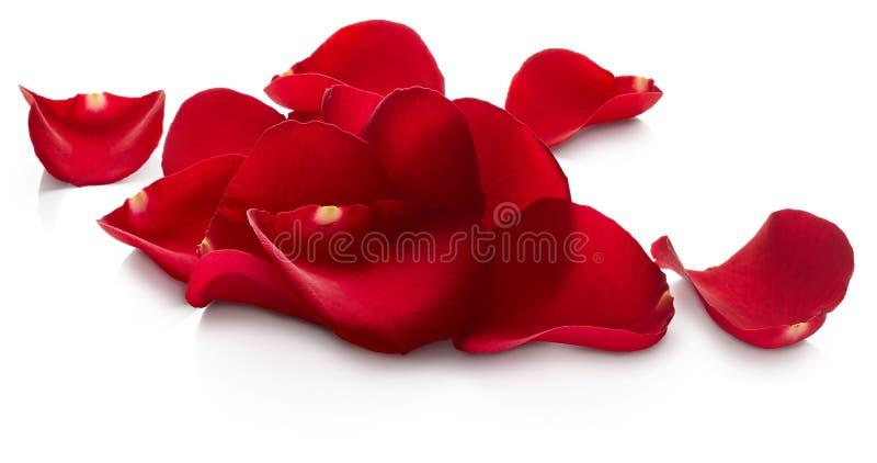 Blumenblätter des Rotes stiegen lizenzfreies stockfoto