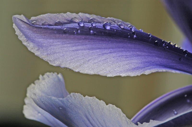 Blumenblätter drei stockfotos