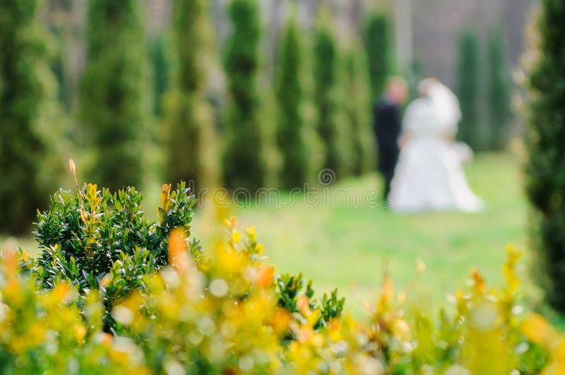 Blumenblätter von Frühlingsbüschen Elemente an einer Hochzeit Das Linsenunschärfebild von Paaren des Bräutigams und der Braut auf stockfotos