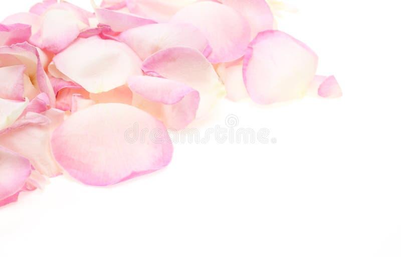Blumenblätter von stiegen stockbild