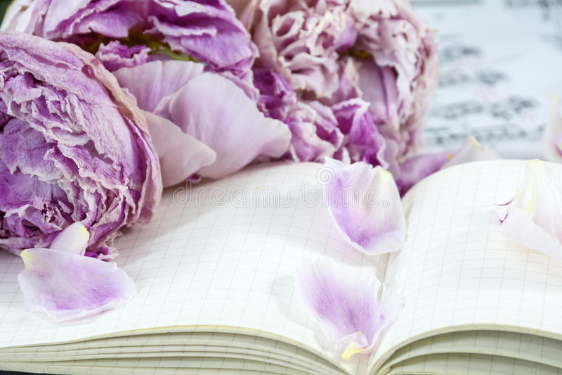 Blumenblätter von verwelkten Pfingstrosen sind auf dem Notizbuch mit Anmerkungen stockfoto