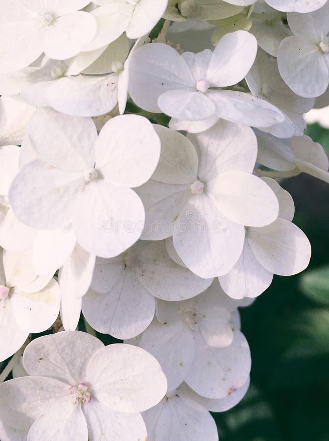 Blumenblüte - Hochzeit, Feiertag und Blumengarten redeten Konzept an stockfotos