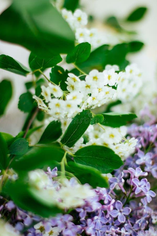 Blumenblüte - Hochzeit, Feiertag und Blumengarten redeten Konzept an stockfoto