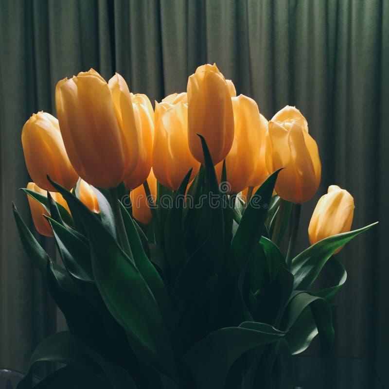 Blumenblüte - Hochzeit, Feiertag und Blumengarten redeten Konzept an lizenzfreie stockfotografie