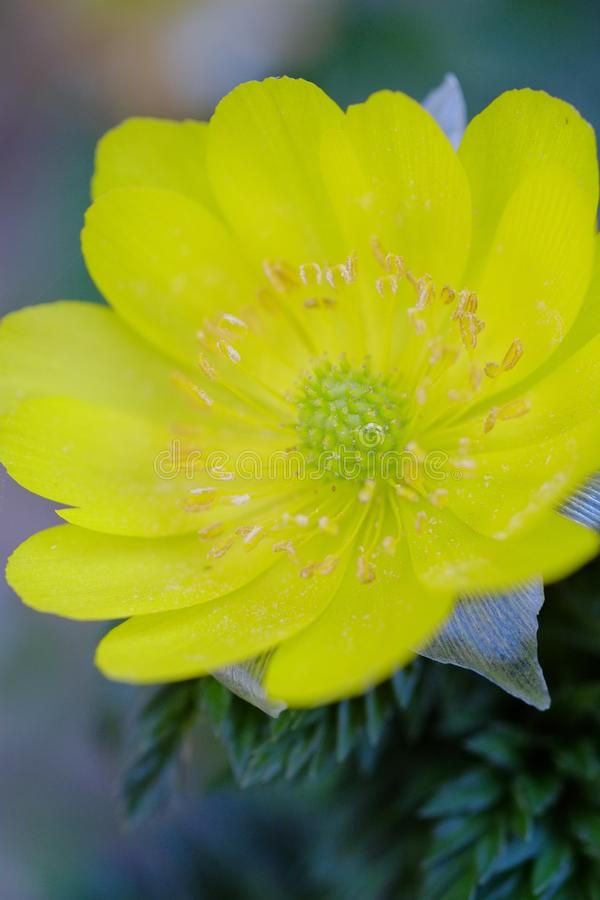 Blumenblüten, die im Frühjahr blühen lizenzfreies stockfoto