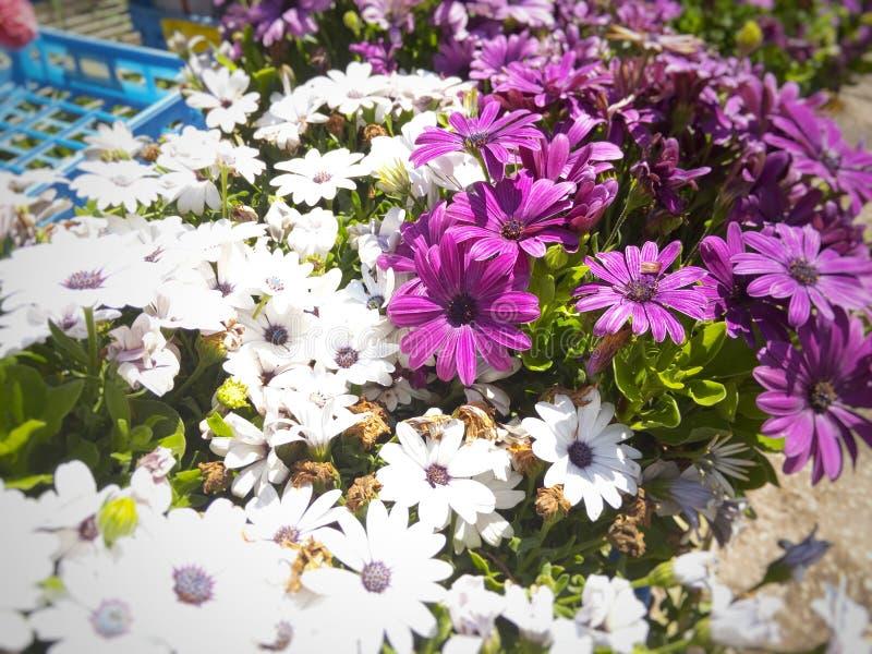 Blumenblüten-Purpurfrühling stockbild
