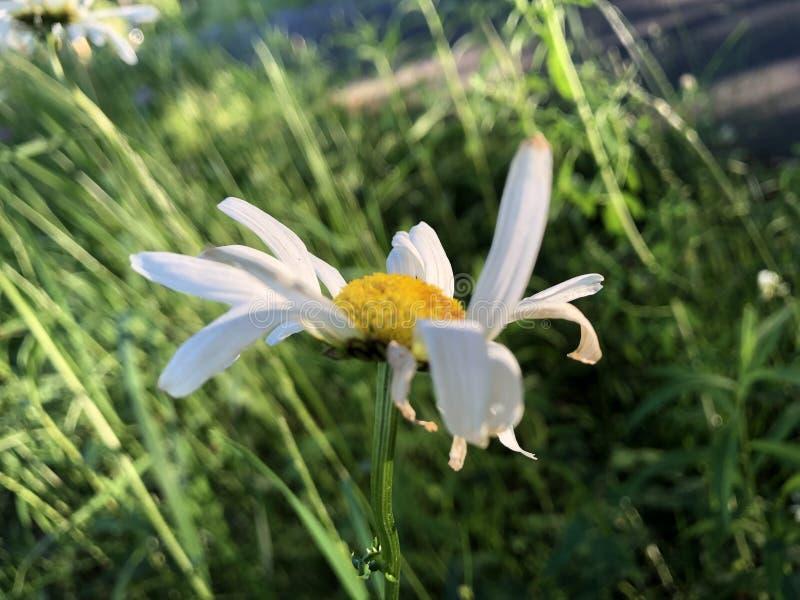Blumenbl?tter, die im Wind durchbrennen stockfotos