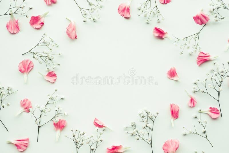 Blumenblattblume auf weißem Hintergrund mit Kopienraum stockfoto