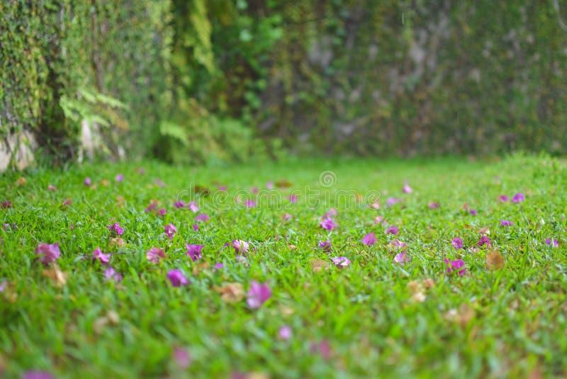 Blumenblatttropfen auf Gras