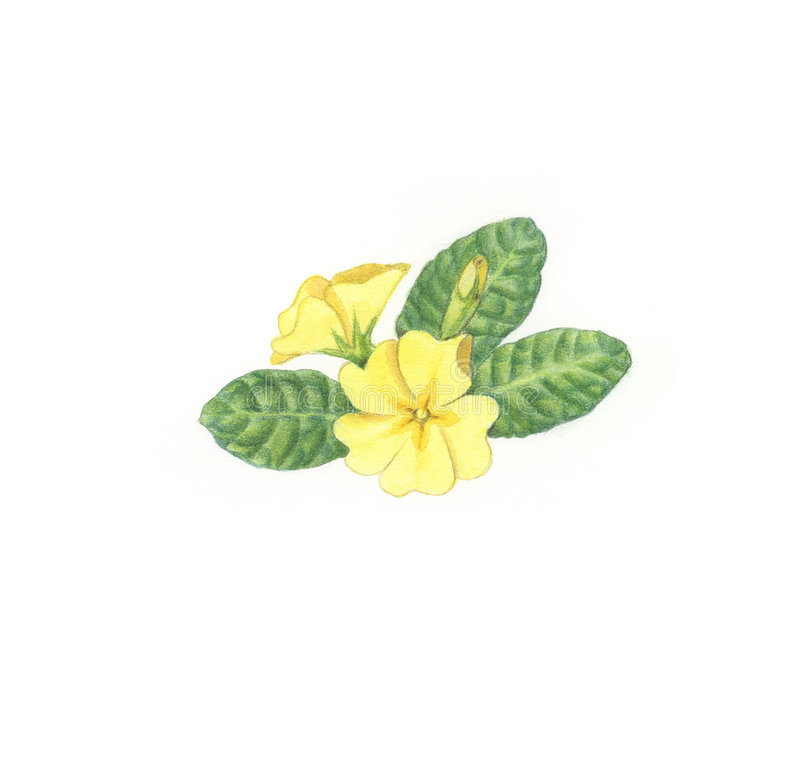 Blumenblumen lizenzfreie abbildung