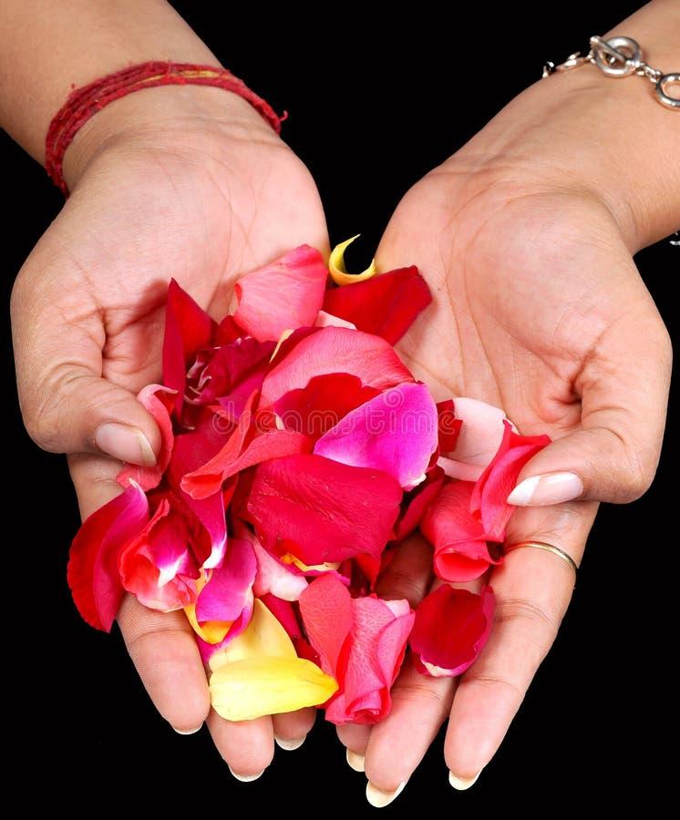Blumenblumenblätter lizenzfreies stockfoto
