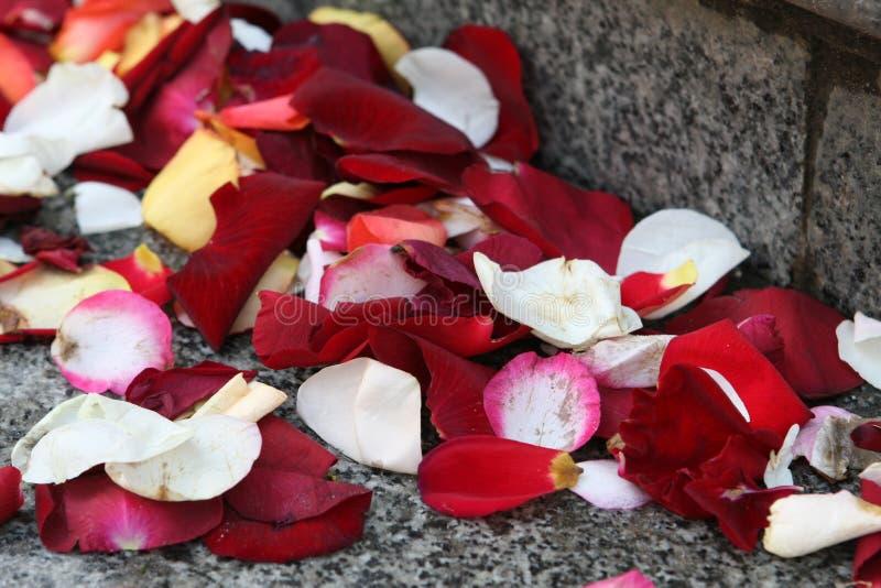 Blumenblumenblätter auf einer Hochzeit stockbild