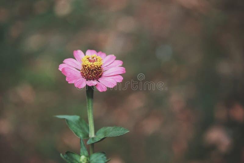 Blumenblumenblatt stockfoto