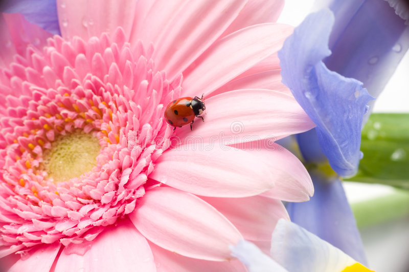 Blumenblumenblatt mit Marienkäfer stockbilder