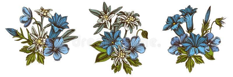 Blumenblumenstrauß des farbigen Edelweißes, Wiesenpelargonie, Enzian lizenzfreies stockfoto