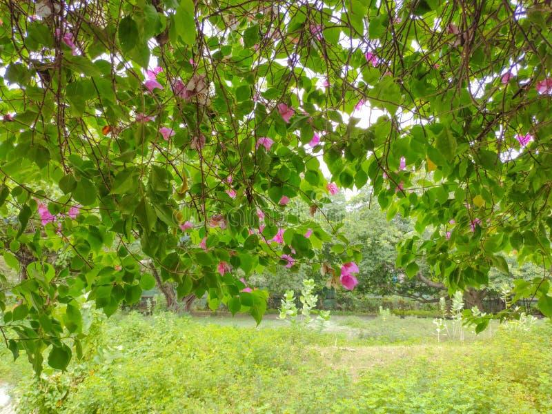 Blumenbrunchs, die vom Baum hängen lizenzfreie stockbilder