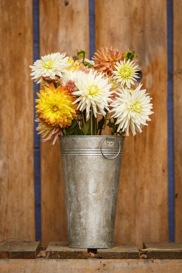 Blumendahlienblumenstrauß der einfachen, rustikalen Landhausstilfallherbst Danksagungsjahreszeit in galvanisierter Metallvaseninn lizenzfreies stockfoto