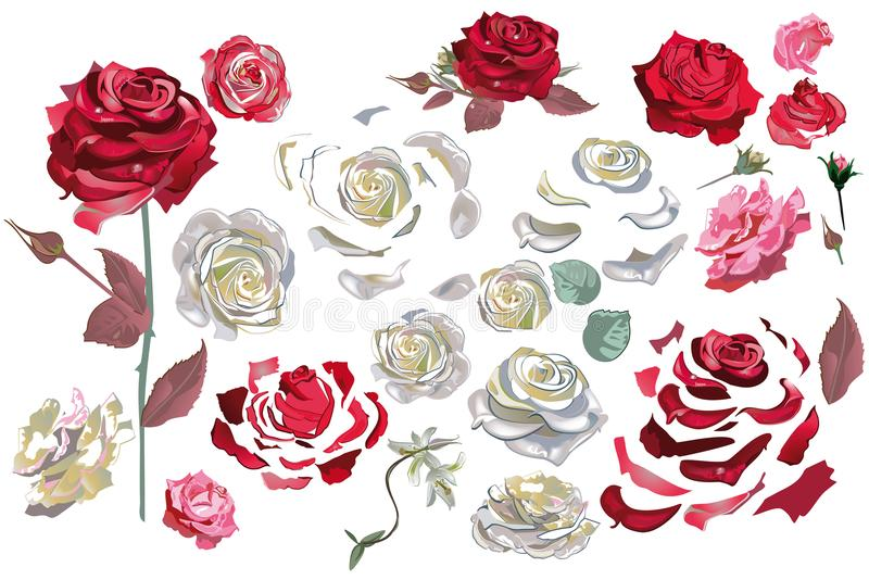 Blumendekorationen mit Pfingstrosen, Rosen und Dahlien stock abbildung