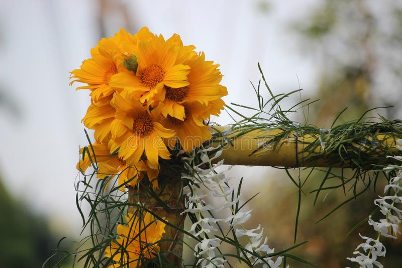 Blumendekorationen - wilde Sonnenblume stockfoto