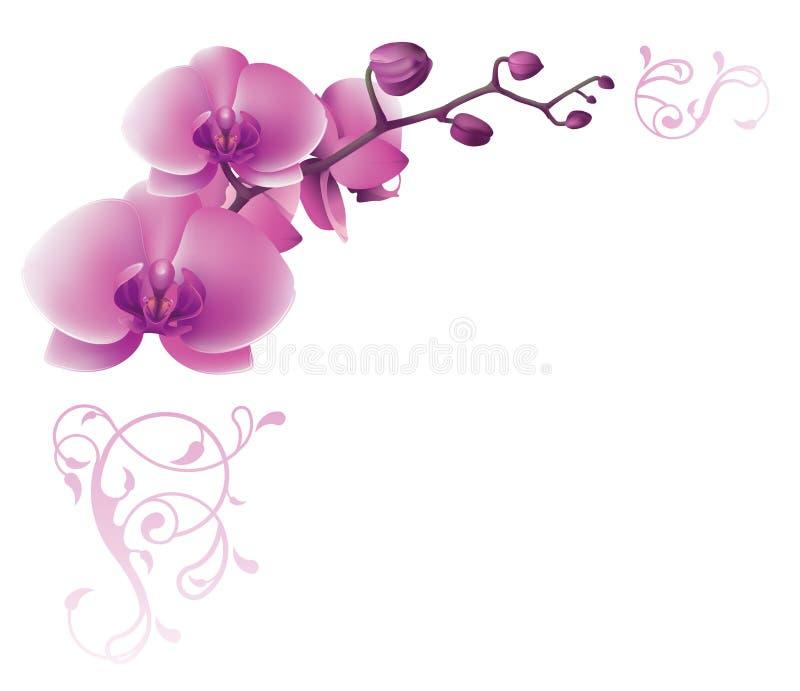 Blumeneckzusammensetzung mit Orchideen lizenzfreie abbildung