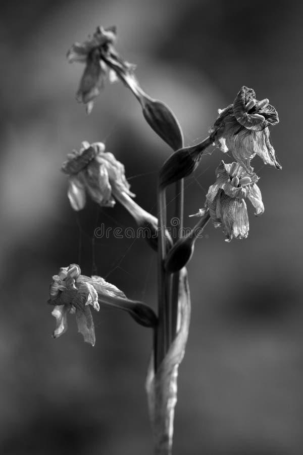 Blumenende lizenzfreies stockfoto