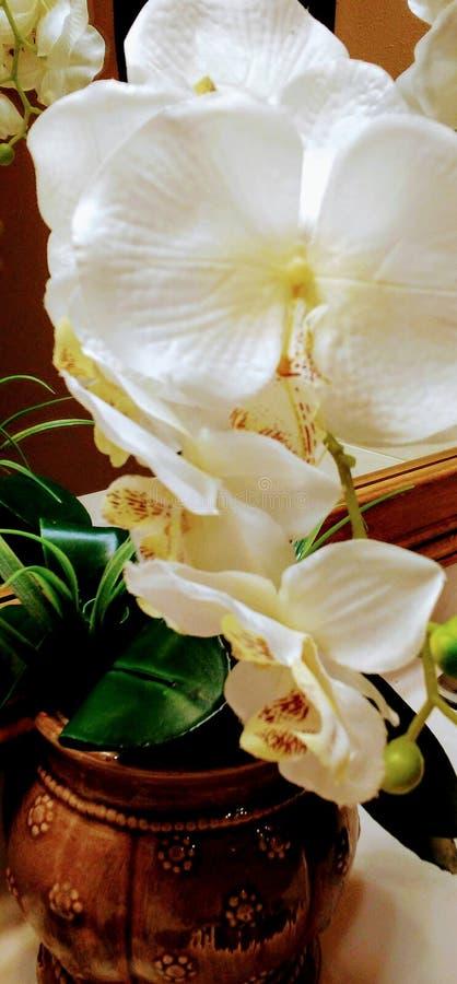 Blumenentdeckungen stockfoto