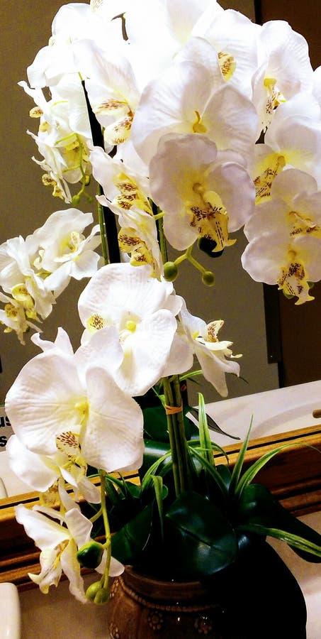Blumenentdeckungen stockfotografie