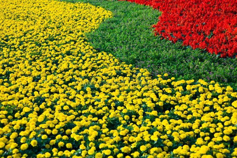 Download Blumenfeld stockfoto. Bild von gelb, betrieb, hintergrund - 27725202